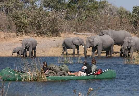 Elephants on Selinda canoe safari