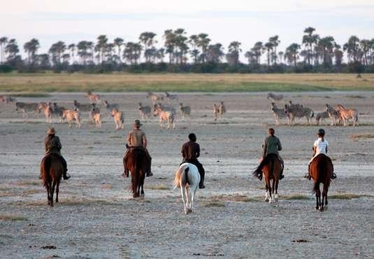 Zebra herd spotted on a horse safari, Makgadikgadi Salt Pans, Botswana