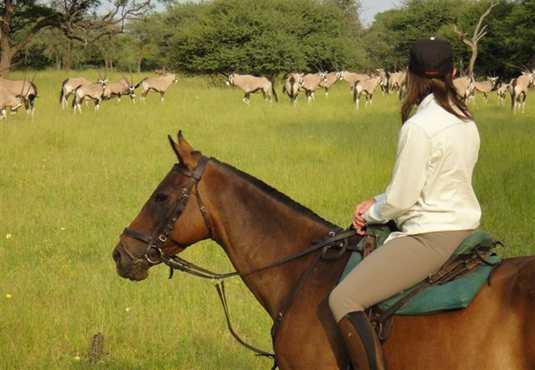 Oryx on Thamalakane River Ride