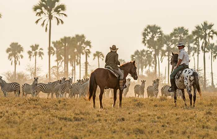 Zebra herd on horse safari in the Kalahari