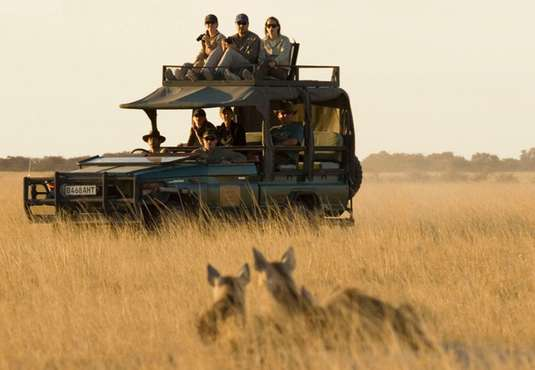 Viewing hyaena on a game drive in the Kalahari