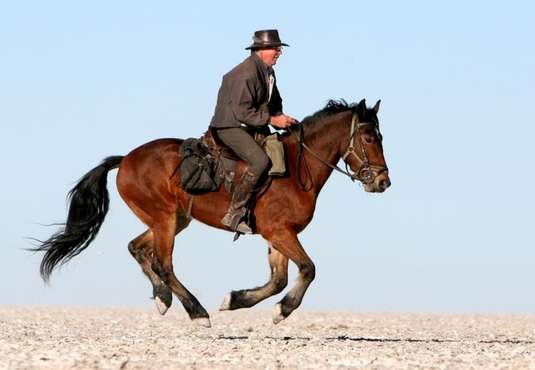 Galloping across Makgadikgadi Pans