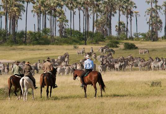 Zebra migration viewing on a horse safari