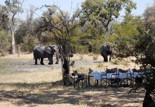 okavango-delta-ride-elephant-lunch