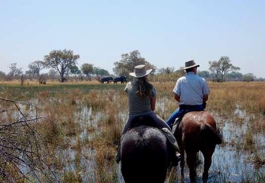 Watching elephants on horse back, Okavango Delta