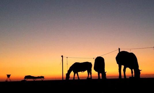 Dawn on the Makgadikgadi Salt Pans