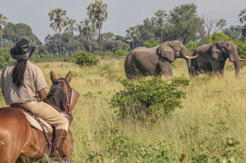 Watch elephants on Okavango Delta horse ride