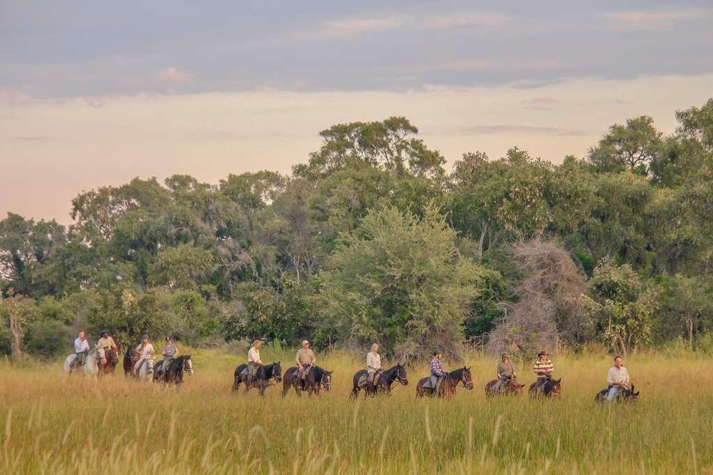 Horse safari, Okavango Dellta