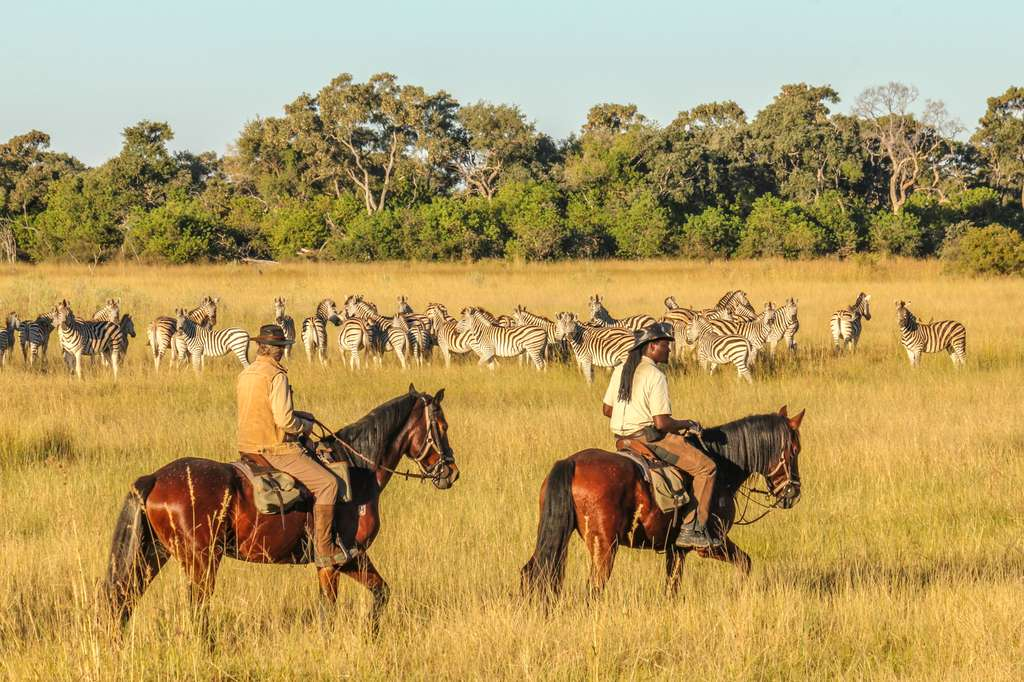Watching zebras on Okavango Delta horse ride