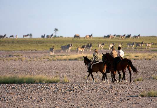 Zebra, green season horse safari