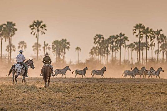 Zebra herd passing by on a horse safari in the Kalahari