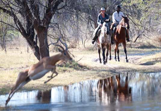 Impala leaping, horse safari