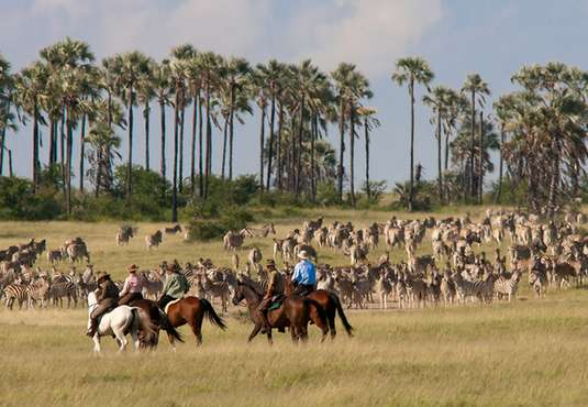 Witnessing a zebra migration on a horse safari
