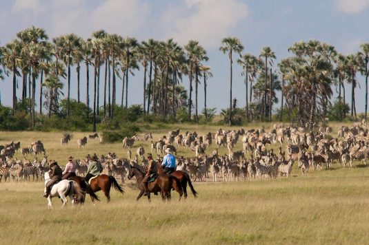 Horse safari during migration season