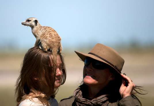 Merrkat sitting on girl's head, Kalahari