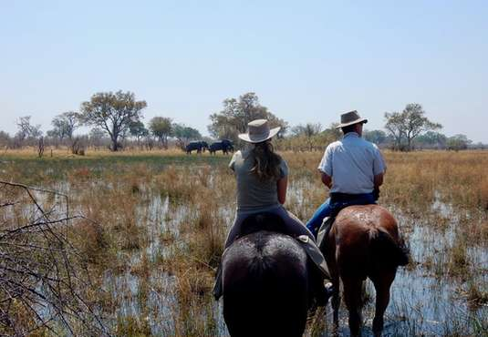 Elephants, horse safari in the Okavango Delta