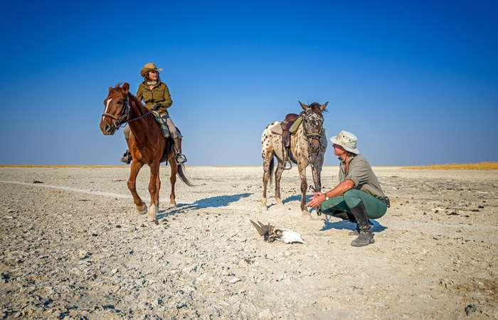 Wildebeest bones, horse safari on Makgadikgadi Pans