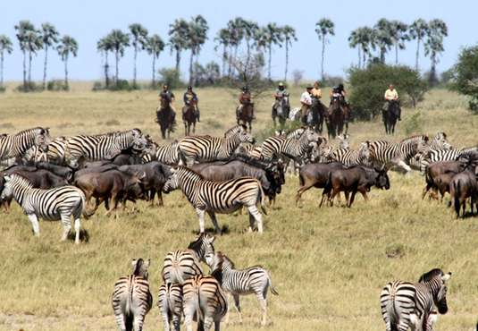 Horse riding through zebra migration